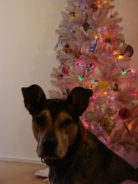 Pippo en de kerstboom