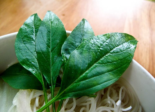 IMG_0425 罗勒叶,basil leaves
