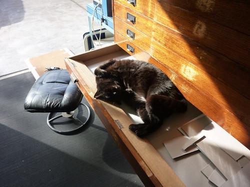 drawercat