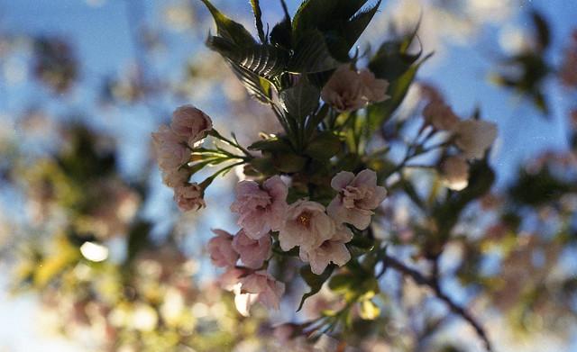 springflowers2010