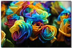 Rose (Taipei Bloom ART)