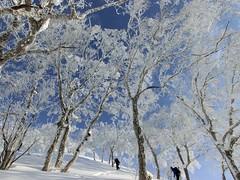 樹氷の尾根を登る