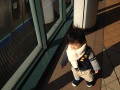 YGPとらちゃん (2012/1/2)