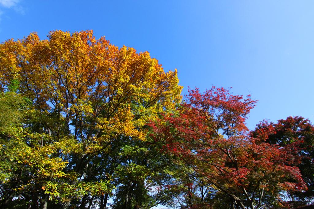 Kyoto Arashiyama tourist guide (20)