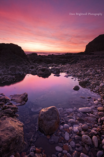 Pool of Pink by Dave Brightwell