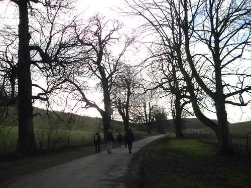 Trees, near Woldingham