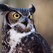 Great Horned Owl by G. H. Holt Photography