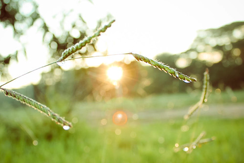 Primeiros raios de sol do dia