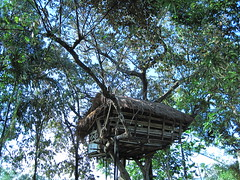 #4 the tree house