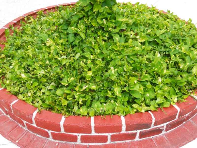 Jardineros en acci n sustituci n del c sped en el jard n - Como plantar cesped en el jardin ...