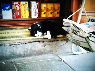este gato siempre está en lo mismo