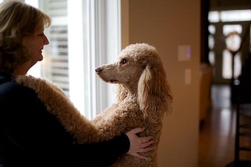 red dog love hug spoo cooper tall 28 myboy joann pendragon standardpoodle lookintomyeyes loveaffair onlywhenwetellhim nowkindofherboy