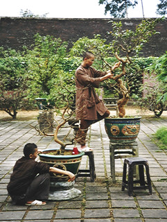 Monk nursing a bonsai tree (Vietnam 2001)