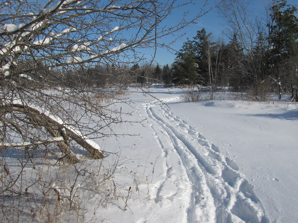 Skiing the Greenbelt