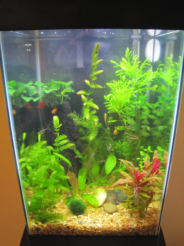 15 gallon column what have you done the planted tank for Column fish tank