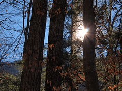 Sun shining through