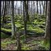 Ogle Place Trail by Ricky P.21