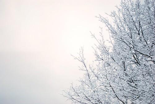 snow2 099ed