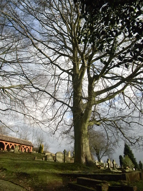 Tree on the hill - Watts chapel