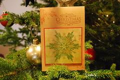 111225 Christmas V. Linda