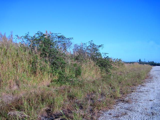 Trema tree cluster 20120118