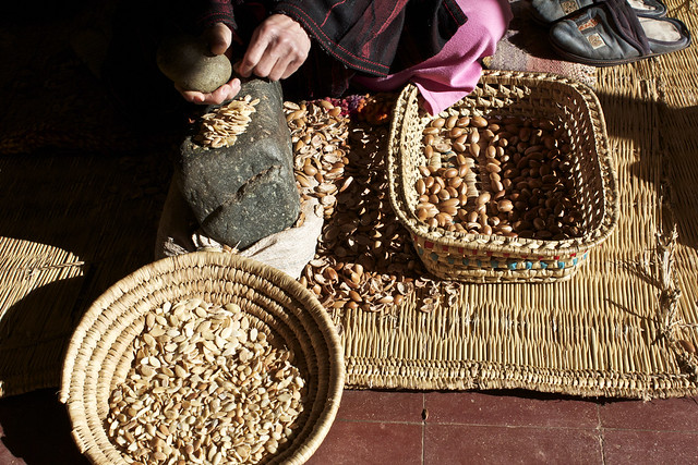 breaking down the argan nuts to make oil