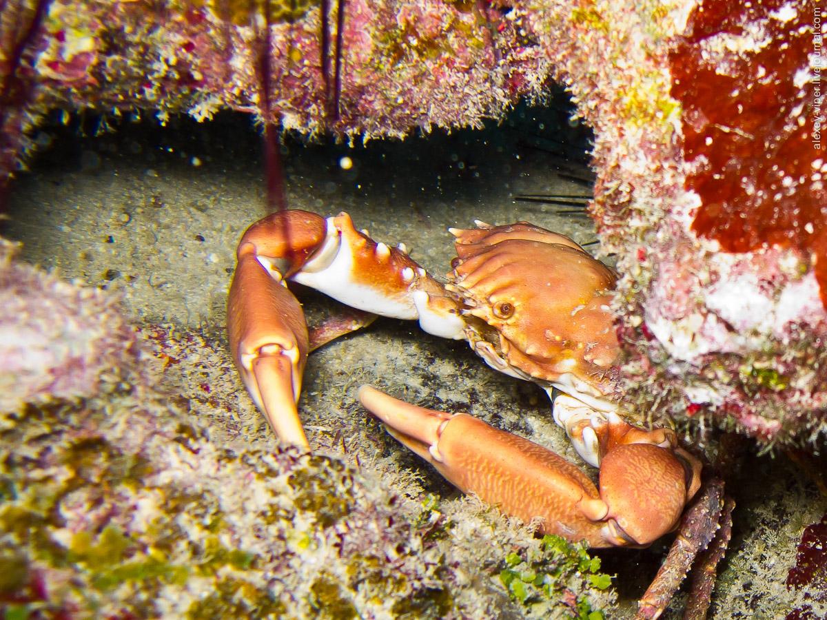 2012.01.12-2012.01.26_dive_safari_[cuba]-diving-018