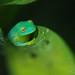 little frog prince by .•۫◦۪°•OhSoBoHo•۫◦۪°•