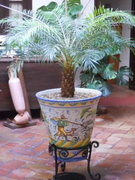 jardineros en acción - palmeras en maceta para la decoración del