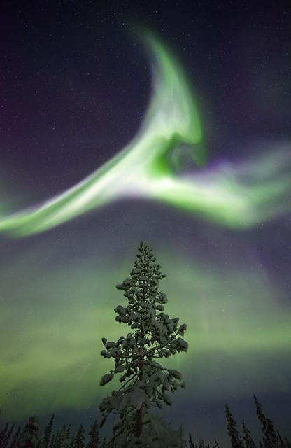 Treetop Aurora, Sweden