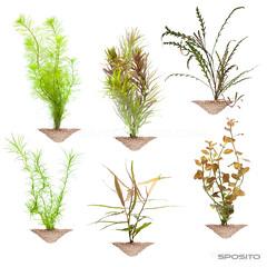 Plantas Aquabase