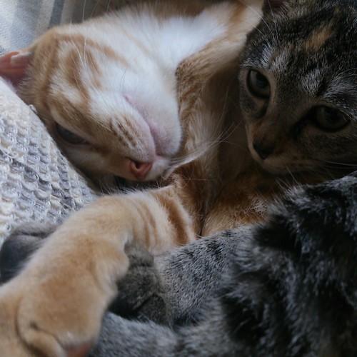 目を開けたまま寝ている!? by Chinobu