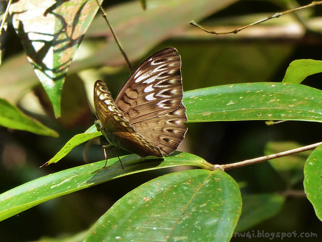 Mount Serapi Butterfly 4