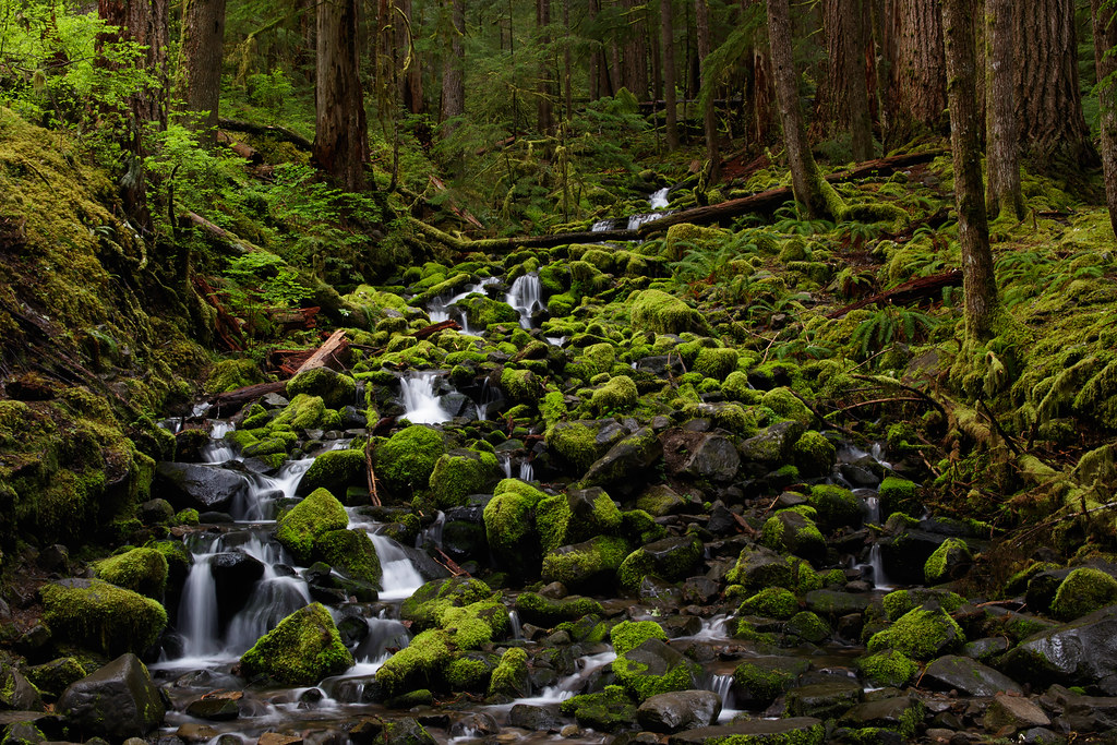 A stream flows past moss-covered rocks in a forest beside the Sol Duc Falls Trail