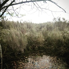 Presque les everglades dans le Poitou ! #geocaching #sightsofgeocaching #gc14e73 - Photo of Monthoiron