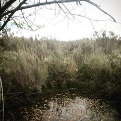 Presque les everglades dans le Poitou ! #geocaching #sightsofgeocaching #gc14e73