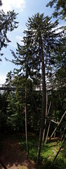 WeatherMaker posted a photo:	Bavarian Forest National Park