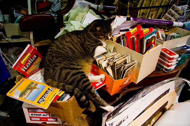 Book Store Cat