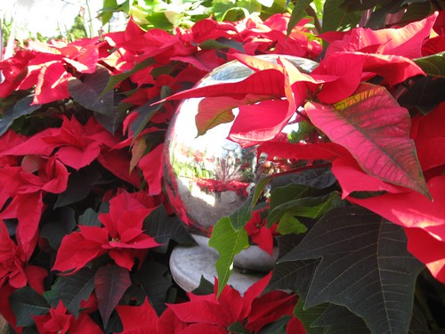 mirror ball and poinsettas