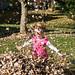 fall_leaves_20111106_21715