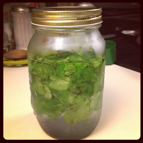 Holiday infusion: mint vodka!
