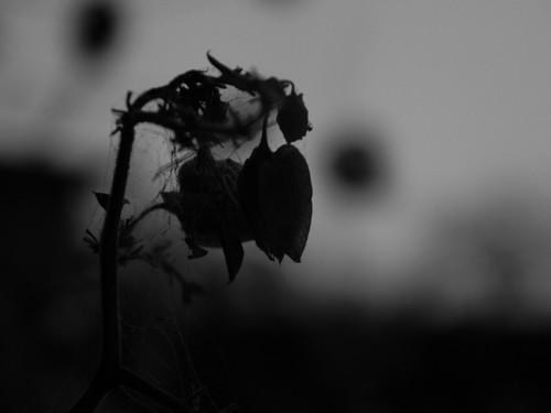 Death by AlexMuñoz