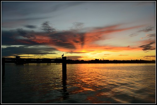 sunset dog mike michael boat photo key long dale florida salty sarasota