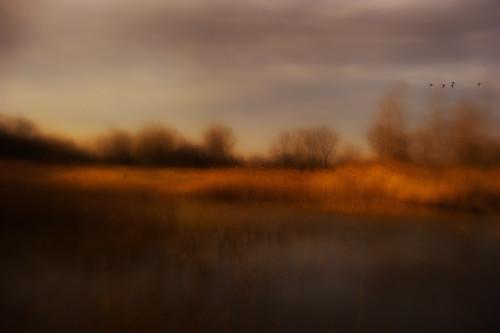 [フリー画像素材] 自然風景, 草原 ID:201112191600