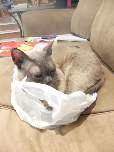 My boy cat loves a shopping bag! by aviva_hadas