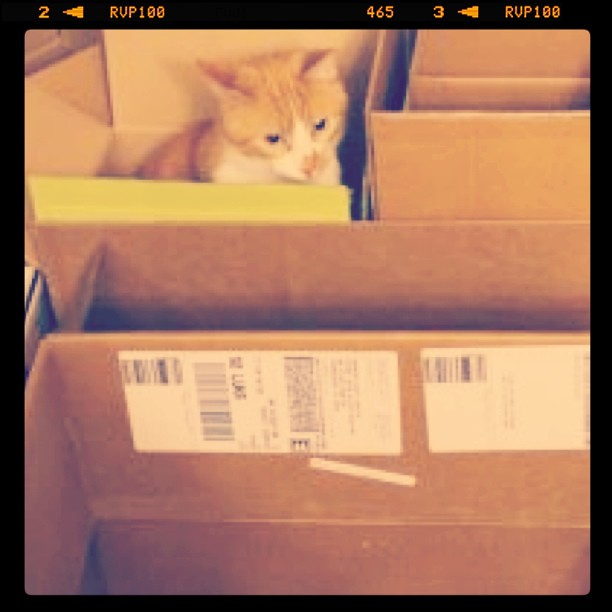 Auggie is the mayor of Box City.