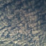 iwasi 宜野湾市大謝名で見上げた鰯雲