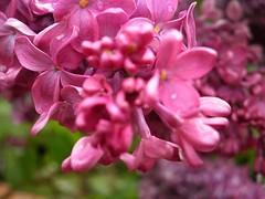Victorian Garden_10