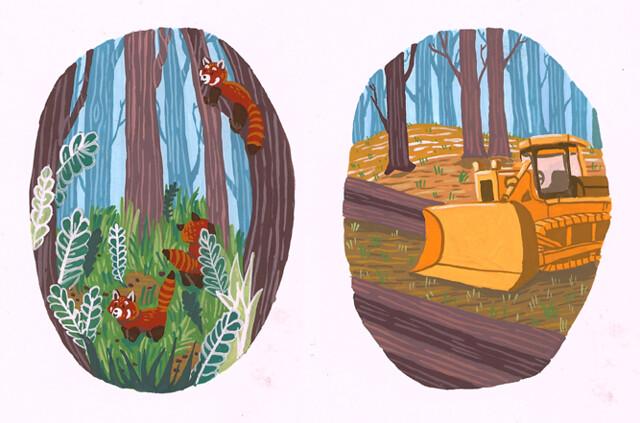 Red Panda Illustrations