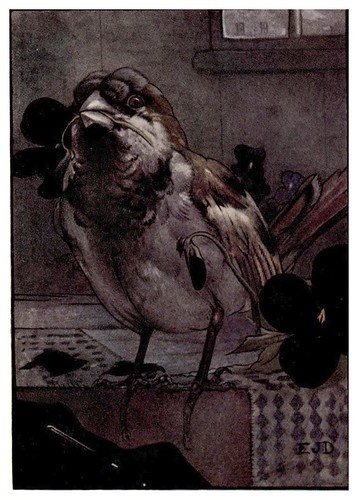 010-El señor Friquet-Birds and beasts 1911- Edward Detmold